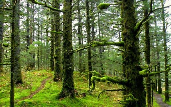 پیدایش جنگل